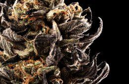 Candid_Cannabis-10_Lindsay-009