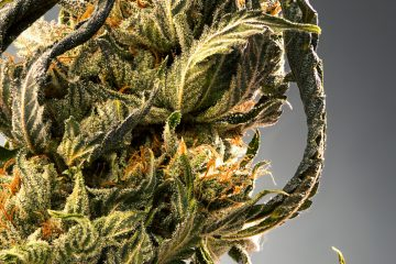 Candid_Cannabis-13_Marty-Lin-002