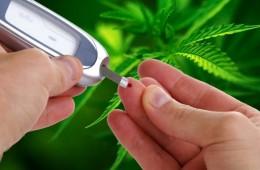 diabetes-cannabis