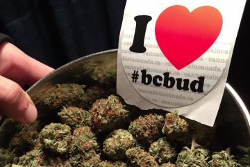 i love BC Bud