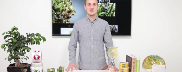 candid cannabis