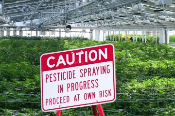 cannabis pesticide greenhouse