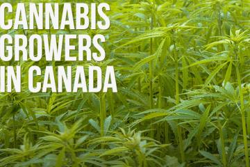 cannabis growers of canada