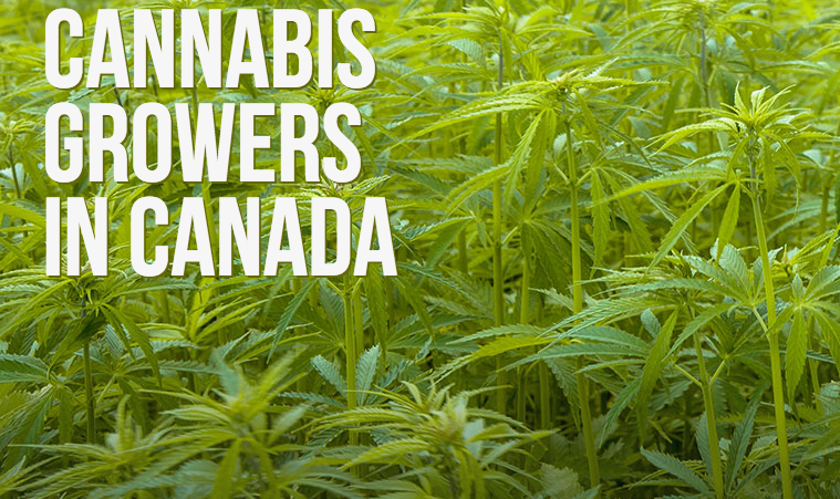 cannabis growers of canada