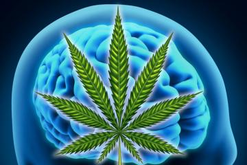 cannabis_epilepsy