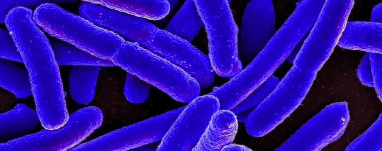 antibiotic-resistant-bacteria
