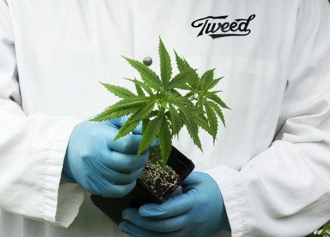 Tweed wins prize for cult-like branding - Cannabis Life Network