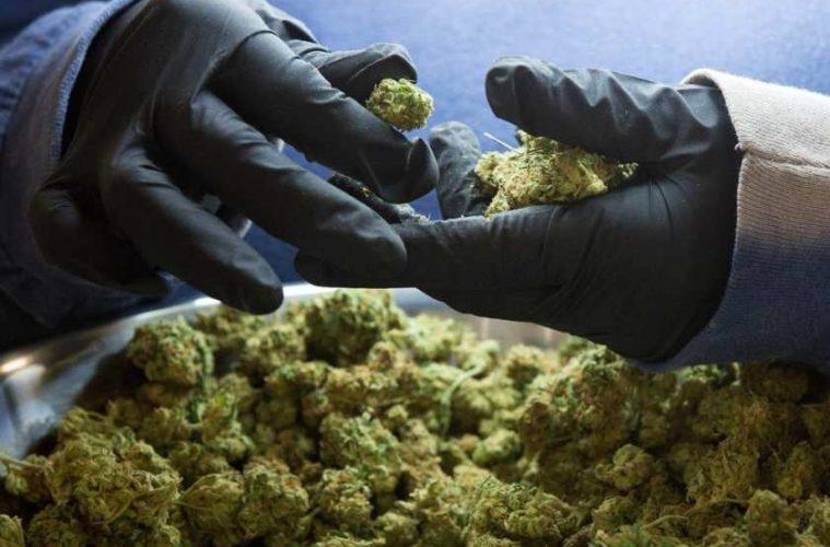 cannabis-getty