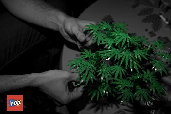 lago-legos-marijuana-2