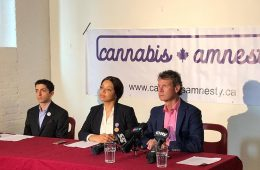 cannabis amnesty