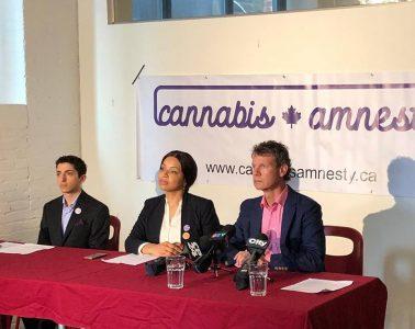 cannabis amnesty