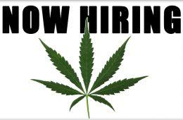careers cannabis
