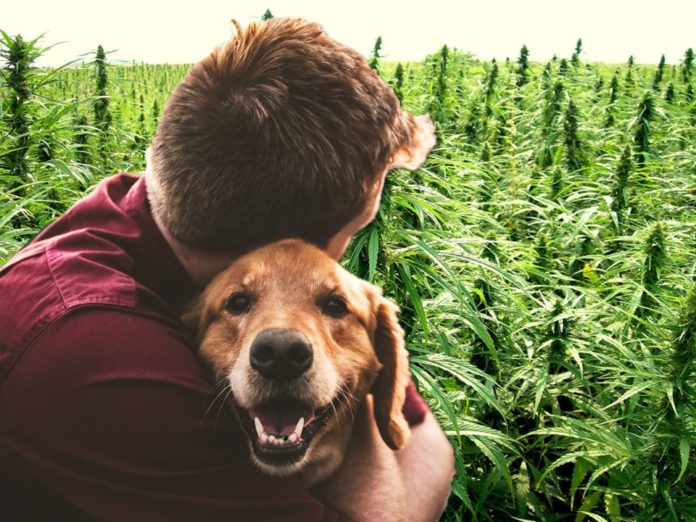 Pot for People and Pets: CBD products for You and your Dog thumbnail