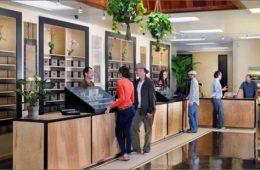 cannabis stores