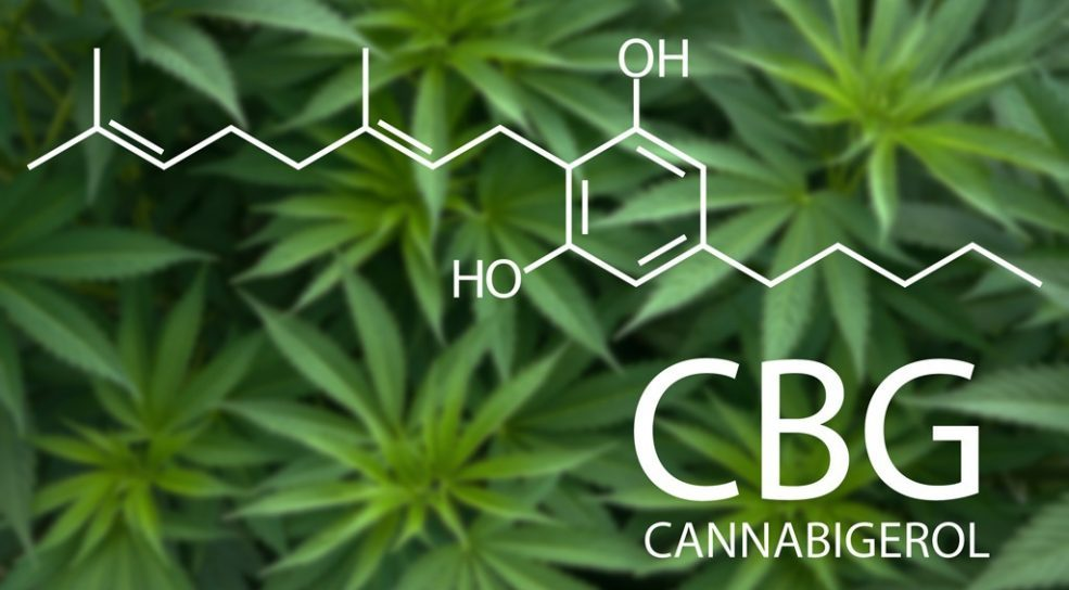 Cannabigerol (CBG): Before CBD and THC - Latest Cannabis News ...