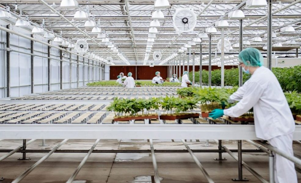 Securities regulators issue guidance on disclosure for cannabis industry